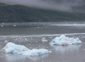 Ice bergs float in the sea aftre calving off the face of a tidewater glacier.