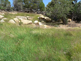 Same landscape as previous image, a rock barrier surrounded by trees. This time the ground is covered in lush grass.