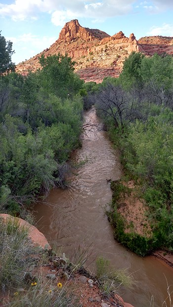 River flowing through thick vegetation away from sunlit butte