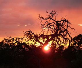The sun sets behind the silhouette of a gnarly tree.