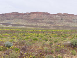 A field of yellow flowers in front of bumpy cliffs.