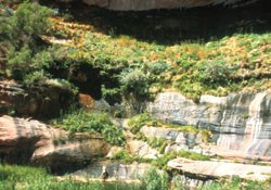 Sandstone alcove overflowing with green vegetation.