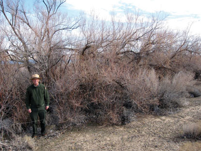 brown tamarisk with ranger