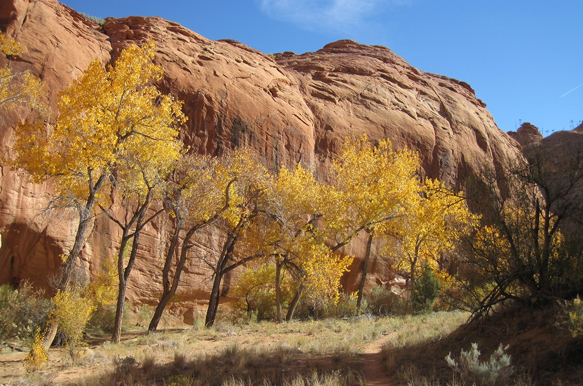 Path winds past trees with bright fall leaves and rounded sandstone cliff in background