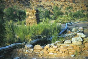 Rubble from a stone cabin. A fallen tree lays across the structure and plants grow inside. Half of a stone chimney stands.