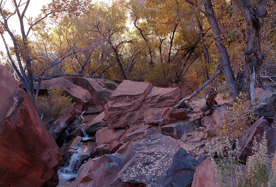 A stream flows through dense trees down red sandstone boulders.