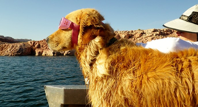 A blond dog wearing pink dog goggles and a human wearing a hat sit on the edge of a boat and stare at the water.
