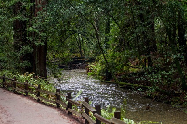 Redwood Creek flows alongside a trail bordered by rustic fencing, with a verdant canopy overhanging the creek.