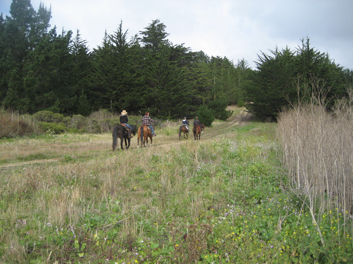 Four horseback riders enjoy a ride down a pathway through trees.