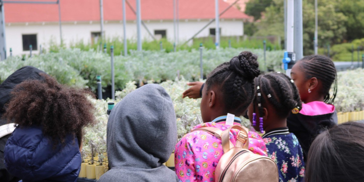 students looking at plants