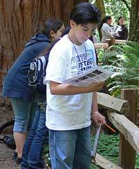 Students study the redwoods