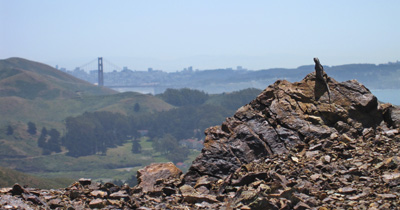 A Western Fence lizard sunning itself on a chert outcropping with the Golden Gate Bridge in the background.