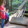 visitors reading the UN plaque at Muir Woods