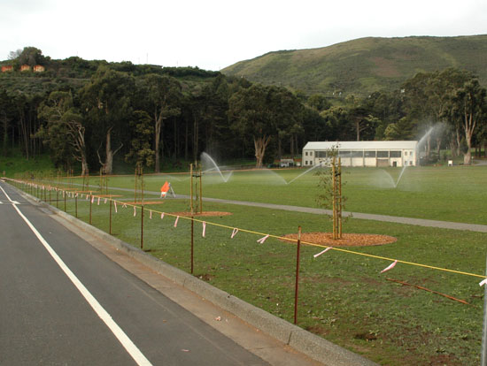 new trees at Center Road