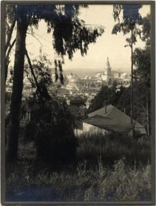 View of PPIE through Trees