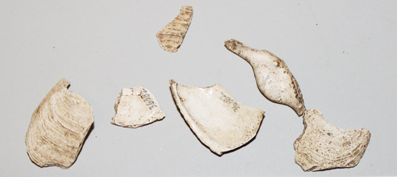 shell-fragments