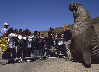 Group of children view large elephant seal in an environmental education class at the Marine Mammal Center.