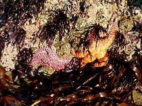 Intertidal and Subtidal Zones