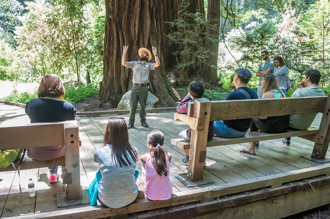 A ranger standing on the Muir Woods board walk points up to the redwoods as visitors listen.