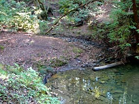 Creek in Phleger Estates