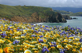 The green grasslands and spring wildflowers of Mori Point