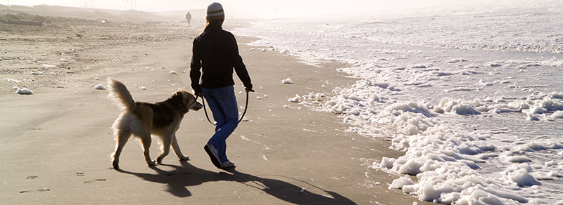 on-leash dog on the beach at GGNRA