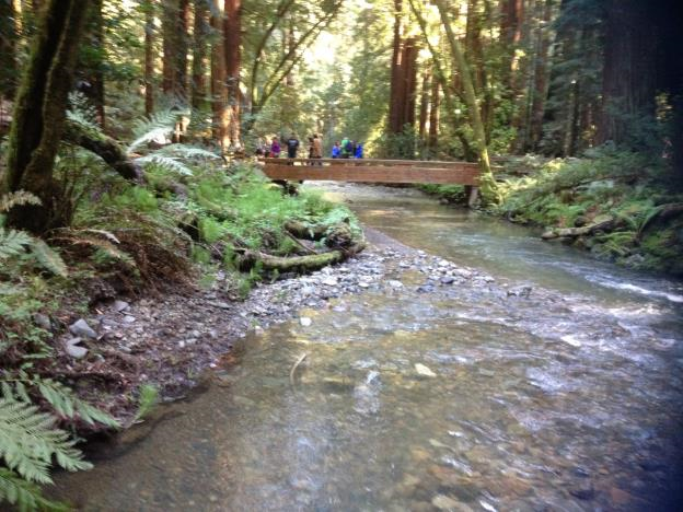 bridge over Redwood Creek