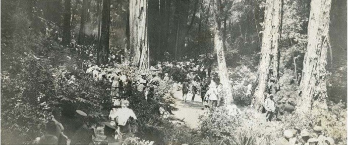 SF bulletin hike through Muir Woods, c1920