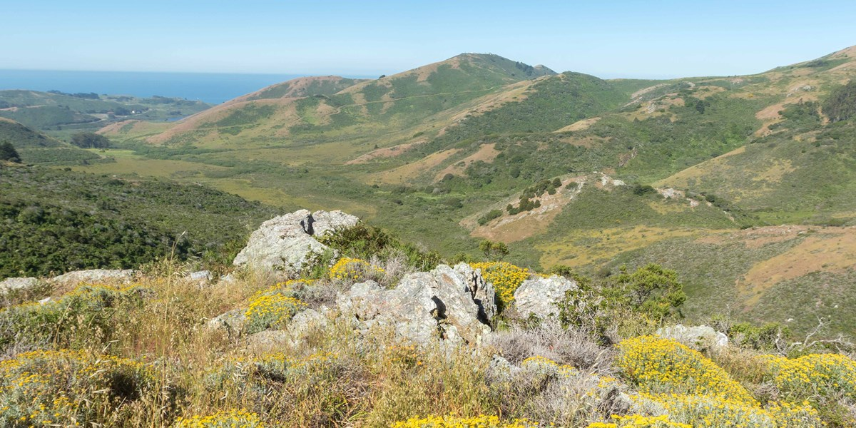 rocky, wild flower, and grass filled hills lead to the pacific coast