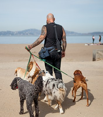 man with four dogs