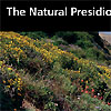 A hillside of wild flowers at the Presidio.