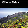 "Milagra Ridge is a habitat ""island"" with breathtaking coastal views and a surprising array of plants and wildlife."