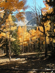 Fall colors at Great Basin