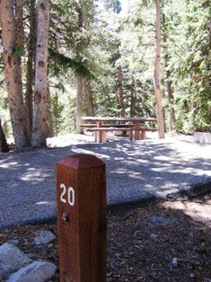 Campsite #20, paved site and picnic table among trees