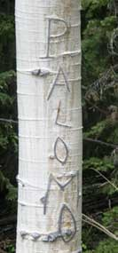 "Aspen carved with the name ""Palomo"""