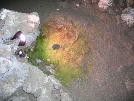 Algae growths in front of cave lights