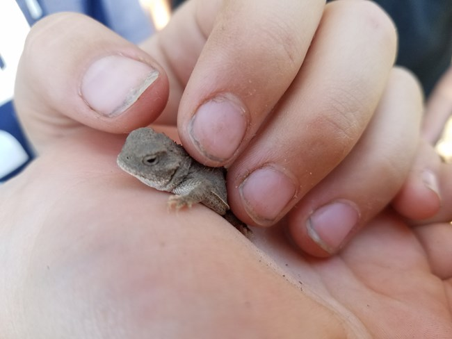 small lizard in child's hand