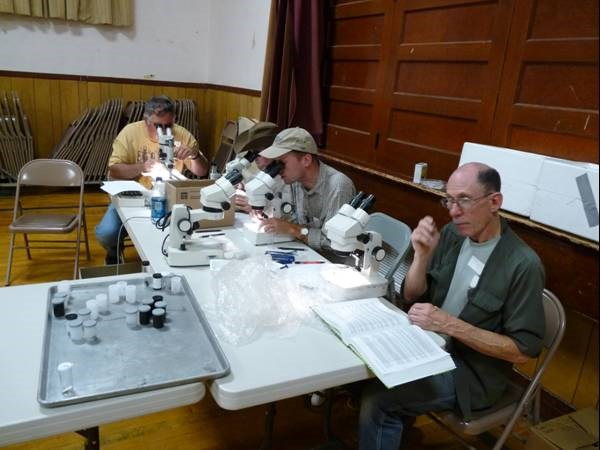four men working at microscopes