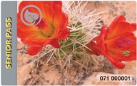 2017 Senior Pass, red flowers on a cactus