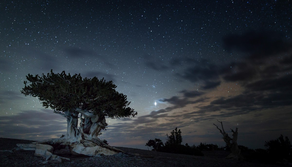 Small pine against a starry sky