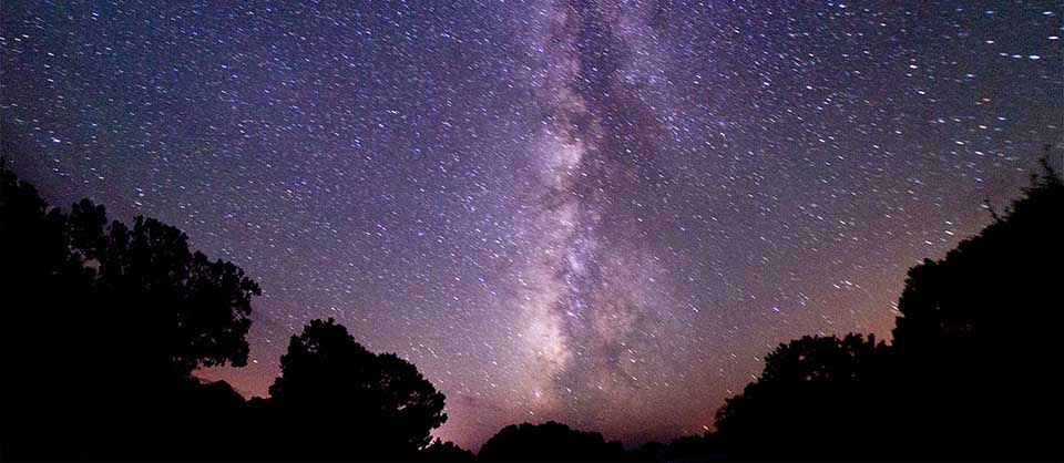 Trees silhouetted against the stars of the night sky. The Milky Way is visible in the center of the photo