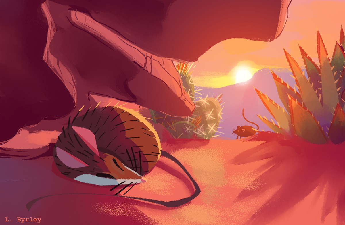 sunset. desert landscape bathed in reddish-orange light. One mouse is sleeping under a rock. second mouse approaching from the distance between cacti.