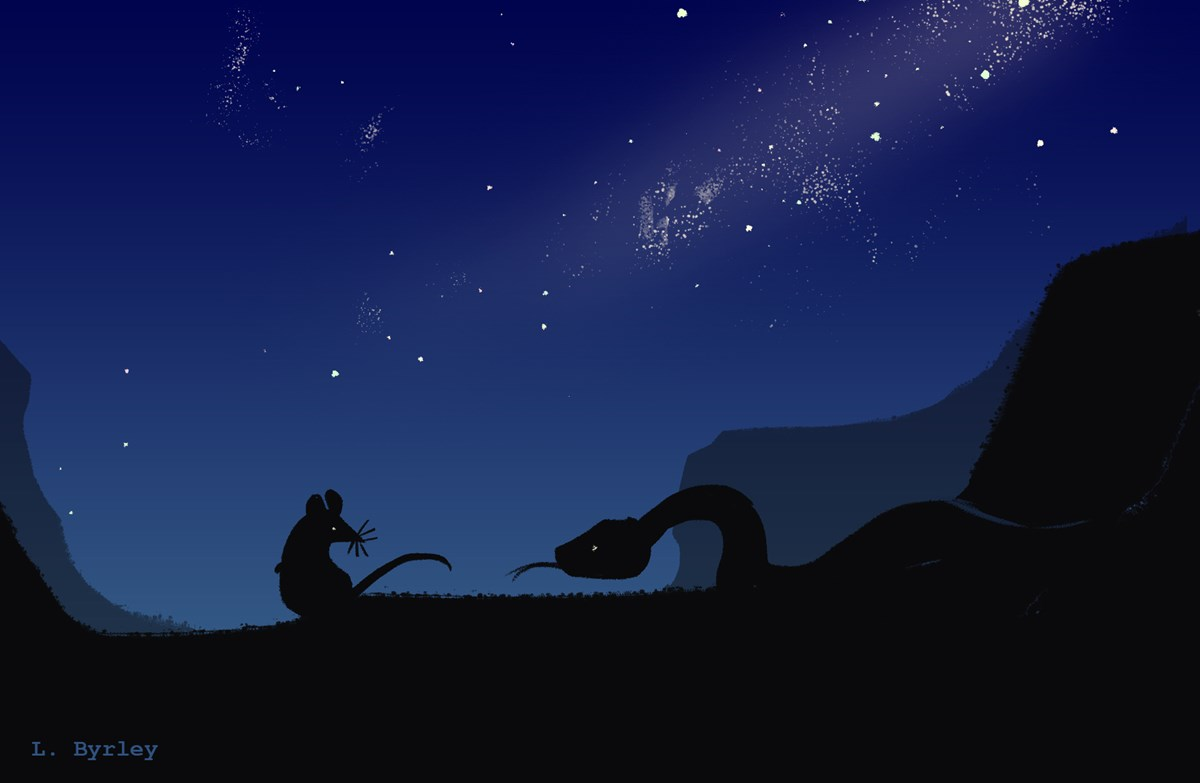 Nighttime. Silhouettes of a mouse and a rattlesnake with canyon cliffs and a starry sky above
