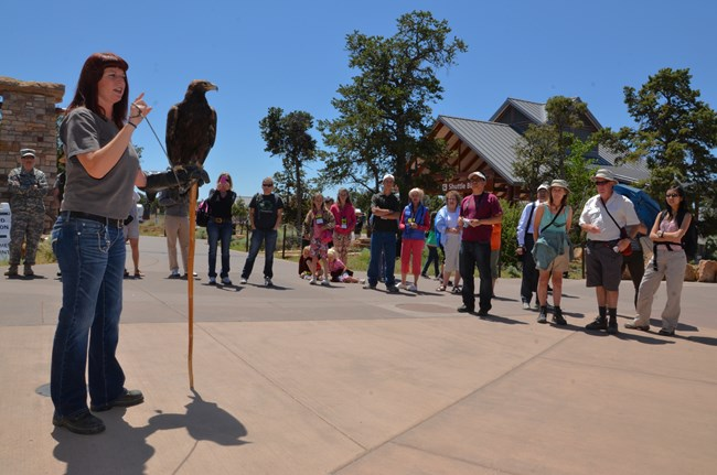 A volunteer stands speaking to a group of visitors with a large brown raptor perched on the volunteer's arm as she speaks.