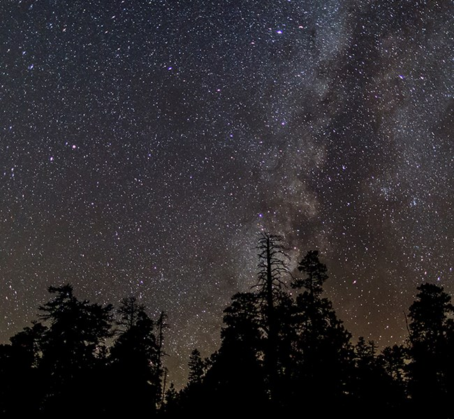 A thick band of stars in the night sky rise behind a dark silhouetted grove of pine trees.