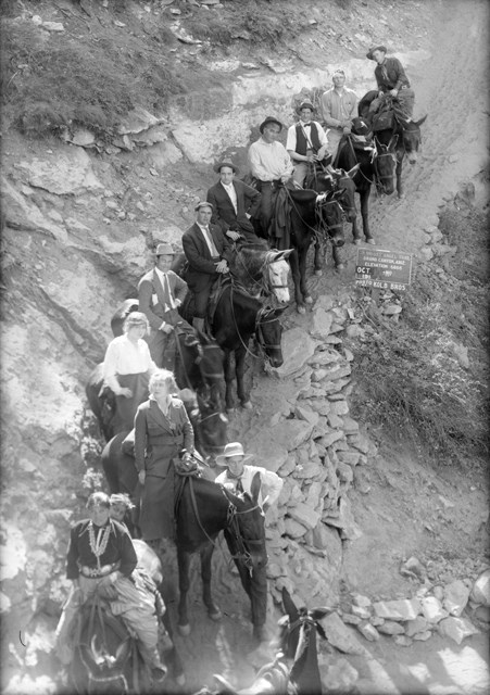 Historic photo of a line of mules and their riders walking down a rocky dirt trail. Bushes grow on either side.