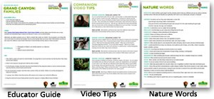 Thumbnails of three downloads: educators guide, video tips, nature words.