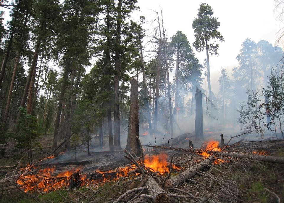a prescribed fire with orange flames slowly burning through deadfall and debris on a North Rim forest with many tall trees.