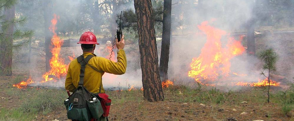 A wildland fire employee wearing a red helmet and a fanny pack loaded with tools and supplies, is monitoring a prescribed fire with flames burning grass and ground debris.