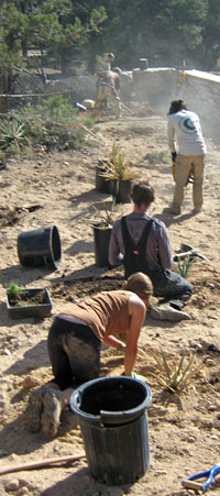 SCA Native Plant Corps Team at work